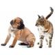Коррекция Поведения Собак и Кошек